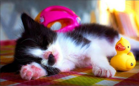 食後 眠気 糖質制限