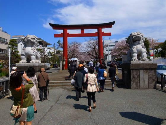 鎌倉のお花見スポット