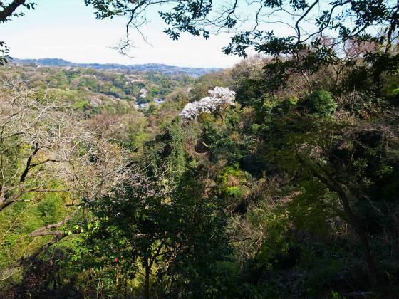 鎌倉のお花見スポット・源氏山公園
